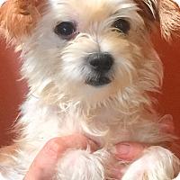 Adopt A Pet :: Lulu and Gigi - Oswego, IL