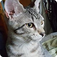 Adopt A Pet :: Ford - Orlando, FL