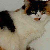 Adopt A Pet :: PINE - Upland, CA