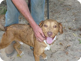 Catahoula Leopard Dog Mix Dog for adoption in Pointblank, Texas - Travis