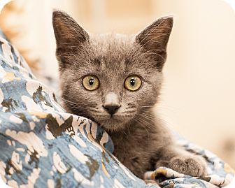 Domestic Mediumhair Kitten for adoption in Dallas, Texas - Birdie