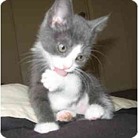Adopt A Pet :: Nina - Davis, CA