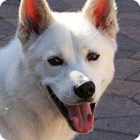Adopt A Pet :: Boltz - Torrance, CA