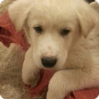Adopt A Pet :: Apollo*ADOPTED!* - Chicago, IL