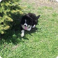 Adopt A Pet :: Darby - Denver, IN
