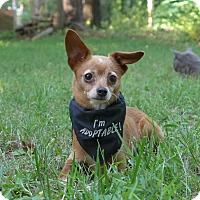 Adopt A Pet :: Magic - Mocksville, NC
