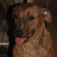 Adopt A Pet :: Debbie - Lone Oak, TX