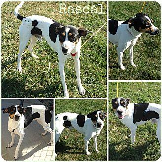 Terrier (Unknown Type, Medium) Mix Dog for adoption in Joliet, Illinois - Rascal