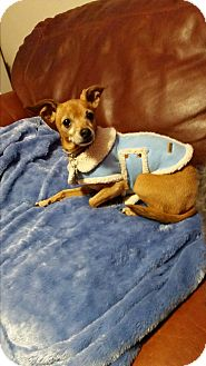 Chihuahua Mix Dog for adoption in Salem, Oregon - Chica