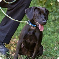 Adopt A Pet :: Sammy/CP - Columbia, TN