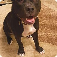 Adopt A Pet :: Onix - Lancaster, PA
