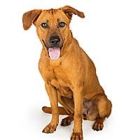 Adopt A Pet :: Harper - Scottsdale, AZ