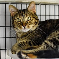 Adopt A Pet :: Freya - Denver, CO