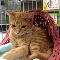 Adopt A Pet :: Penny - Whittier, CA