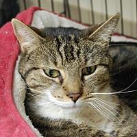 Adopt A Pet :: Alf - Brooklyn, NY
