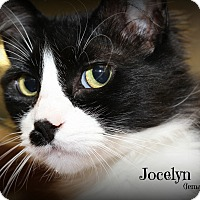 Adopt A Pet :: Jocelyn - Springfield, PA