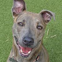 Adopt A Pet :: Tina - St. Louis, MO