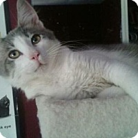 Adopt A Pet :: DYLAN - Modesto, CA