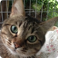 Adopt A Pet :: Tigger - Whittier, CA