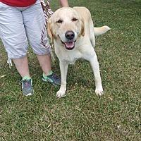 Adopt A Pet :: Sadie - Trenton, MO