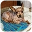Photo 2 - Yorkie, Yorkshire Terrier Dog for adoption in Long Beach, New York - Spikey
