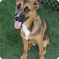 Adopt A Pet :: Lindsey - Mission Viejo, CA