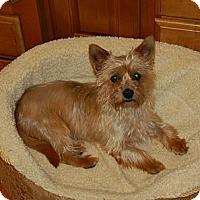 Adopt A Pet :: Murphy - Charlotte, NC