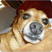 Adopt A Pet :: Skippy - Lawndale, NC