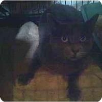 Adopt A Pet :: Javien - Fort Lauderdale, FL