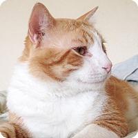 Adopt A Pet :: Cormac - St. Louis, MO