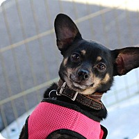 Adopt A Pet :: Dutchess - Henderson, NV