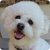 Adopt A Pet :: Bobbi - La Costa, CA