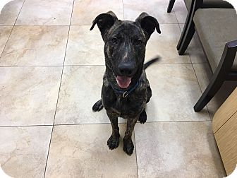 German Shepherd Dog Mix Dog for adoption in Mission Viejo, California - Artax