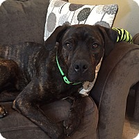 Adopt A Pet :: Jackson - Broomfield, CO