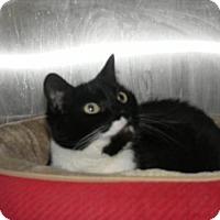 Adopt A Pet :: Oscar - Milwaukee, WI