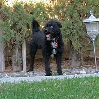 Adopt A Pet :: Riley - Upland, CA