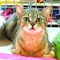 Adopt A Pet :: Gypsy - Knoxville, TN