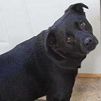 Adopt A Pet :: Doobie - Clear Lake, IA