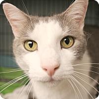 Adopt A Pet :: Ulysses - Warwick, RI