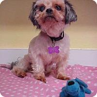 Adopt A Pet :: Sweet Sally - 9 lobs - Dahlgren, VA