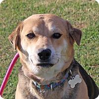 Adopt A Pet :: Kate - Marion, AR