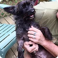 Adopt A Pet :: Vanna - Sherman, CT