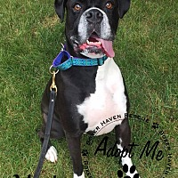 Adopt A Pet :: Available to Adopt - Marty - Waterford, MI
