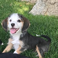 Adopt A Pet :: Sina - Salt Lake City, UT