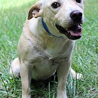 Adopt A Pet :: Jase - Waldorf, MD