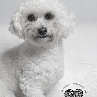 Adopt A Pet :: Jay Jay - Inglewood, CA