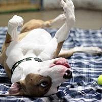 Adopt A Pet :: Banjo - Stafford, VA