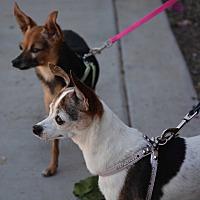 Adopt A Pet :: Cookie and Jasmine - Phoenix, AZ