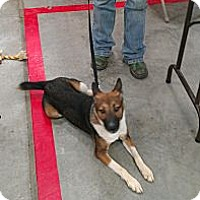 Adopt A Pet :: Sydney - Conway, AR