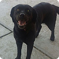 Adopt A Pet :: Onyx - Cathedral City, CA